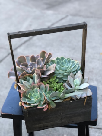 Elegant Succulent Box Plant