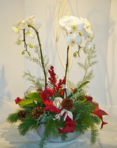 ELEGANT ORCHID Holiday Planter