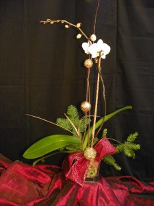 Elegant Orchid Orchid Plant