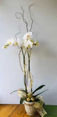 Elegant Orchid Plant  in Pensacola, FL | JUST JUDY'S FLOWERS, LOCAL ART & GIFTS