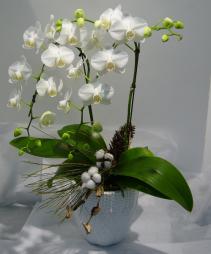 ELEGANT ORCHID PLANTER Phalaenopsis Orchid Planter