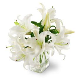 Elegant White Lilies