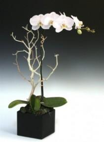 Elegant White Orchid Arrangement