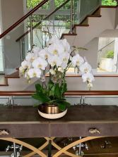 Elegant White orchids