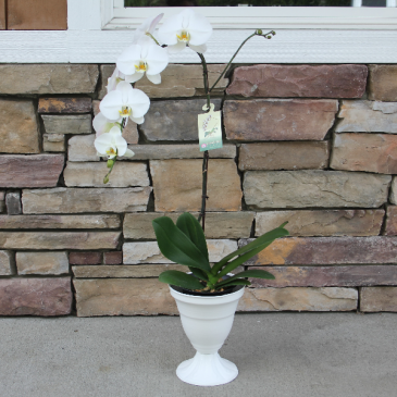 Elegently White Blooming Plant