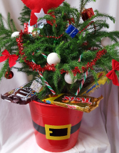 NORFOLK PINE TREE DECORATED FOR CHRISTMAS!! Select $45.00 w/o candy and $49.95 with candy. VERY POPULAR!!!!