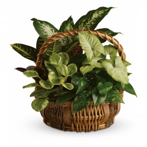 Emerald Basket T106-1A