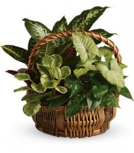 Lush Garden of Green Plants Plant Basket