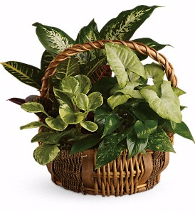 Emerald Garden Basket  in Valley City, OH | HILL HAVEN FLORIST & GREENHOUSE