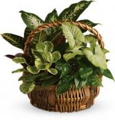 Emerald Garden Basket mixed dish garden