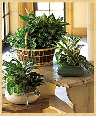 Emerald Garden Planter Air Purifier