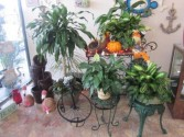 Enchanted Florist Display of Potted Plants Plant