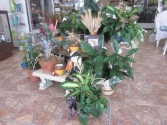 Enchanted Florist Potted Plant Display  Plant
