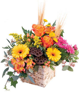 Enchanting Harvest Floral Arrangement in Yankton, SD | Pied Piper Flowers & Gifts