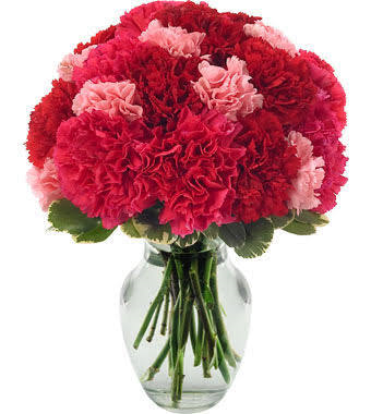 ENDLESS LOVE! CARNATIONS ONLY