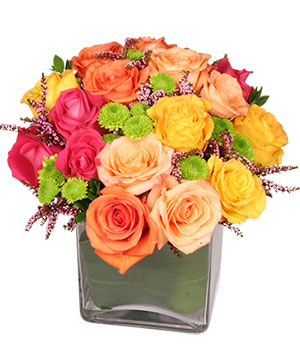 Energetic Roses Arrangement in Glens Falls, NY | ADIRONDACK FLOWER