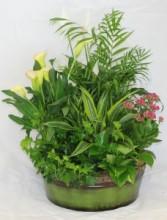 English Garden Blooming Planter
