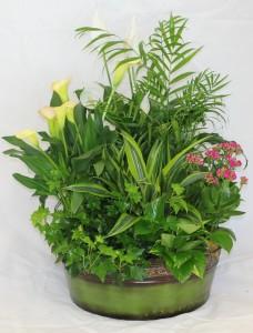 english garden blooming planter - English Garden Florist