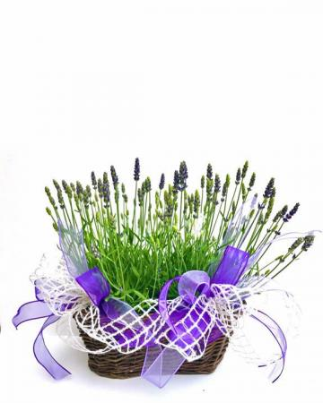 English lavender basket Outdoor Planter