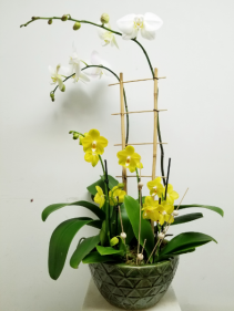 English Orchid Garden Was $129.99 Now $99.00