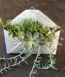 Envelope Succulent Garden