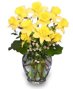 Narcisos Amarillos Arreglo Floral In Falls Church Va Genos Flowers - Narcisos-amarillos