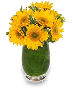 GIRASOLES HERMOSOS Florero in Plainview, TX | Kan Del's Floral, Candles & Gifts