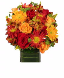 Essence of Fall Cut flowers