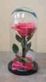 Eternal Rose