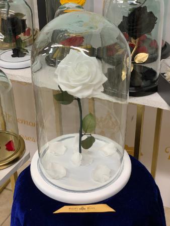 Eternal Roses Large White Eternal Roses