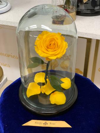 Eternal Royalty Roses Yellow Medium Eternal Roses