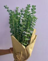 Eucalyptus Bunch Greenery