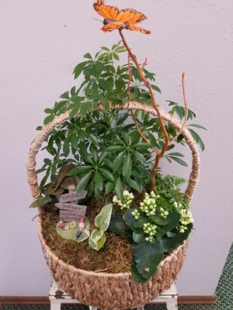 European Gardens Fresh Plant Arrangements