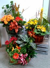 Euro Baskets Green & Blooming Plants