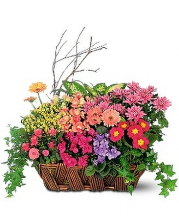 Mothers Day Euro Garden Basket  For the Plant Lovers