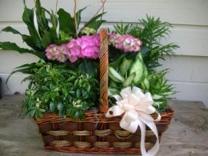 Euro Garden green & blooming plants in Kennesaw, GA | FAITH DESIGNS FLORIST