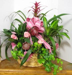 Euro Garden mixed plant basket