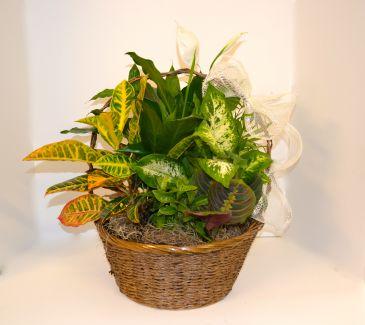 Eurogarden variousplants in a basket