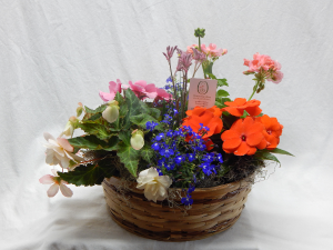 European Basket Garden Live Flowering Plants in Norway, ME | Green Gardens Florist & Gift Shop