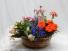 European Basket Garden Live Flowering Plants