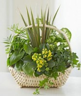 European Basket Garden
