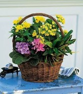 Thomaston Florist European basket in the bloomin