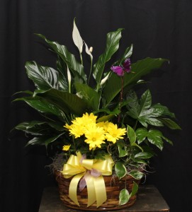 European Basket Plants in Kannapolis, NC | MIDWAY FLORIST OF KANNAPOLIS