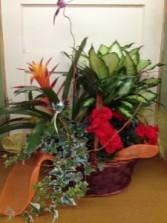 European Basket Plants