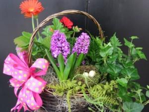 European Garden Blooming Basket Plants in Southern Pines, NC | Hollyfield Design Inc.
