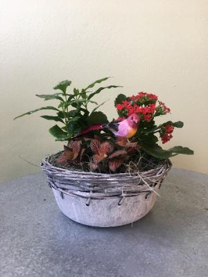 European Dish Garden  in La Grande, OR | FITZGERALD FLOWERS