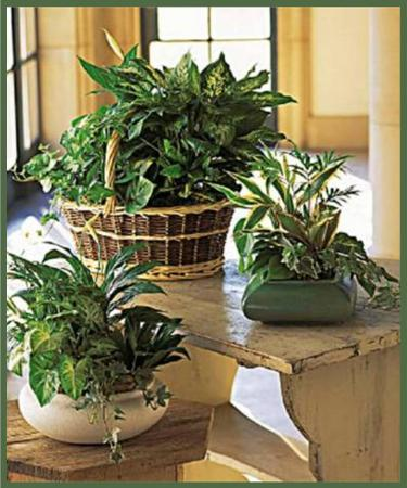 European Dish Garden *Air Purifier