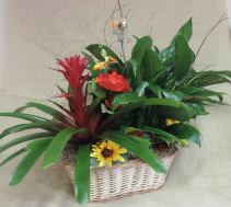 European Dish Garden Blooming Plant, Green Plant, with silk flowers in a basket