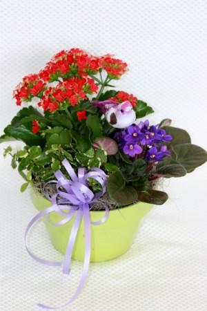 European Dish Garden planter in La Grande, OR | FITZGERALD FLOWERS