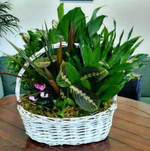 European Garden  Basket of Plants in Bluffton, SC | BERKELEY FLOWERS & GIFTS